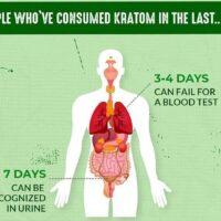 Does Kratom Show Up In Drug Tests