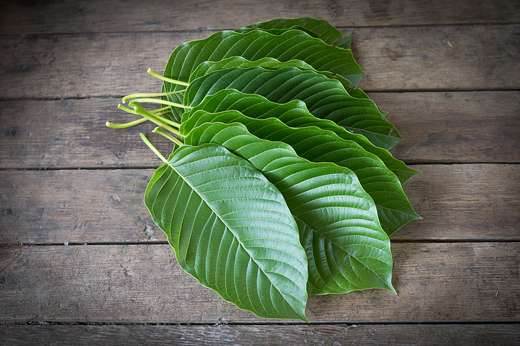 What is the Right Kratom Dose?